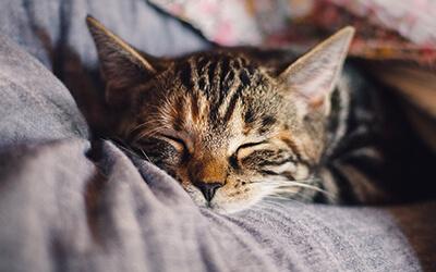 Schlafmaske online kaufen und bestellen - zur Entspannung - besser schlafen